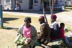 zimbabwe016