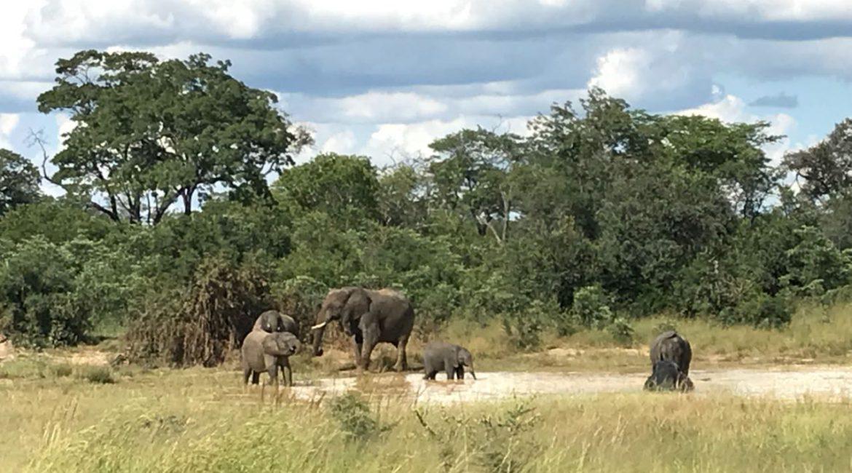 Simbabwe Reisebericht mit ZimRelief im Frankfurter Allgemeine Quarterly